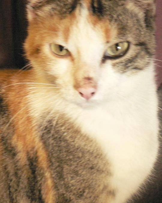 Naya – Disparue le 15 juillet 2014 à St Symphorien (33)