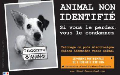 Identification de votre animal