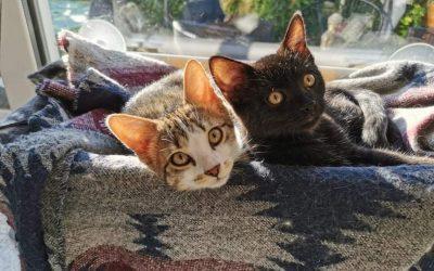 Winrie et Mikasa